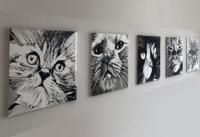 serie-huisdieren-katten-01